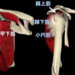 腱板断裂の為のピラティスー『首、肩、背中の疾患に対応するピラティスWS』動画1週間限定割引
